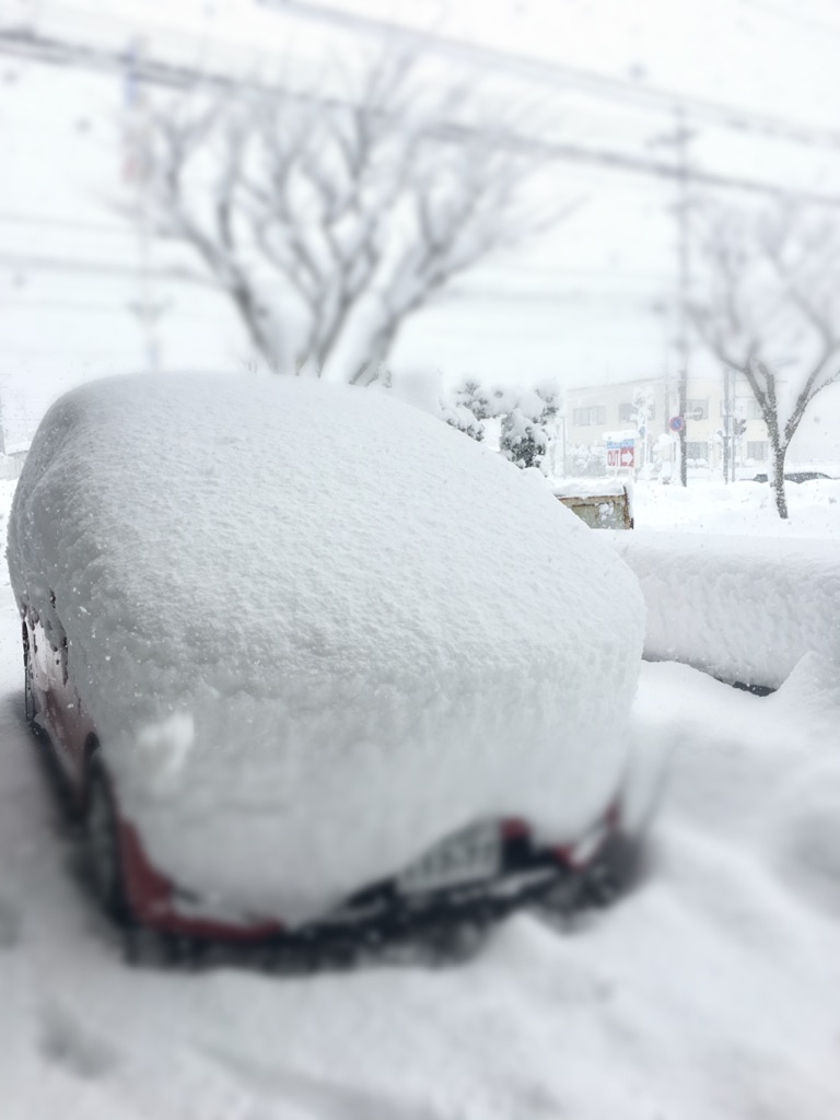 またまた大雪に見舞われています